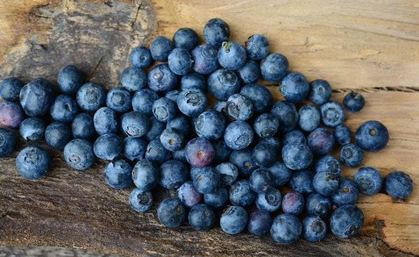 blueberry dog treat