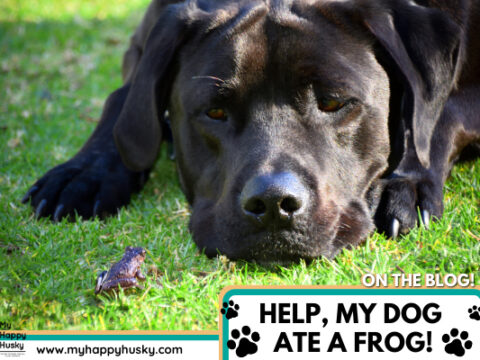 My Dog Ate a Frog (Here's What to do!)