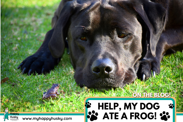 my-dog-ate-a-frog