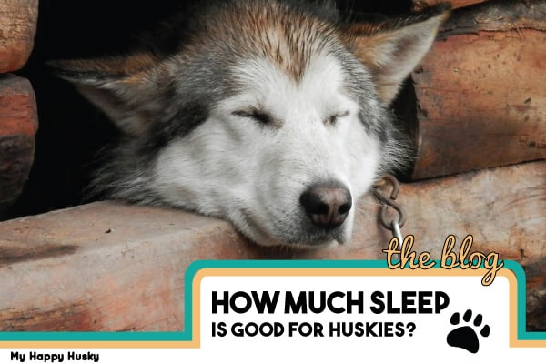 how much sleep should a husky have