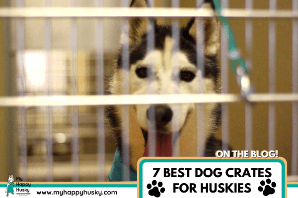 best dog crate for a husky