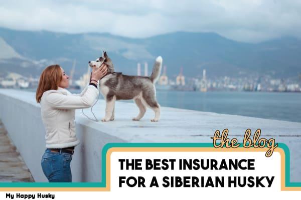 best pet insurance for a siberian husky