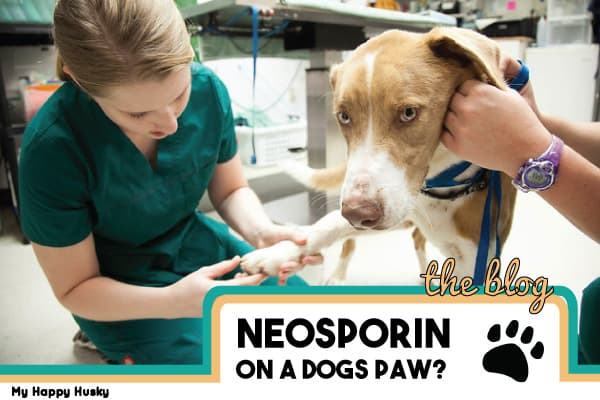 can you put neosporin on a dogs paw