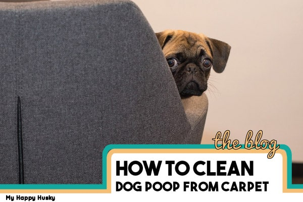 how to get rid of dog poop from carpet