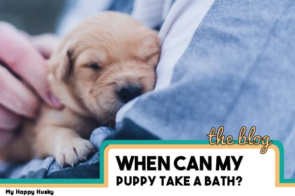 What Age Can A Puppy Take First Bath What You Should Know My Happy Husky