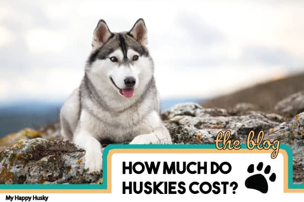 how-much-do-huskies-cost