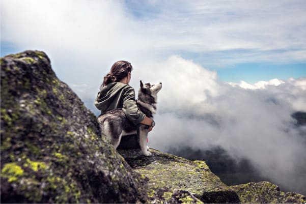 do huskies need another dog?