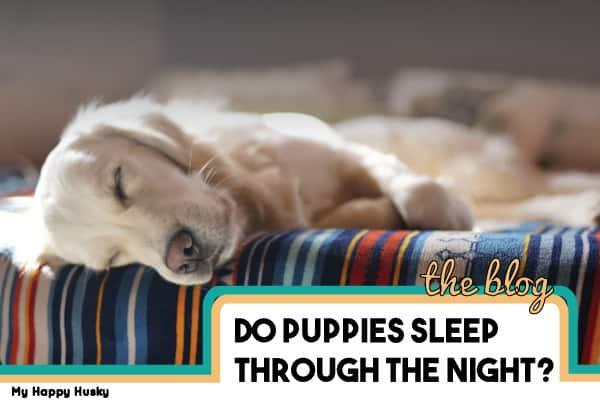 4 Best Ways to Help Your Puppy Sleep at Night – Sleep Guide