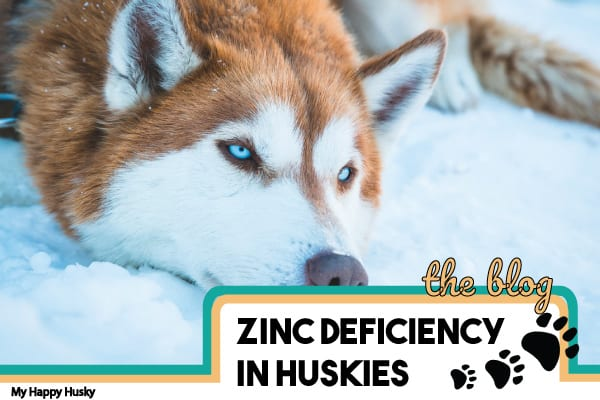 Correcting Zinc Deficiency in Huskies | What To Know
