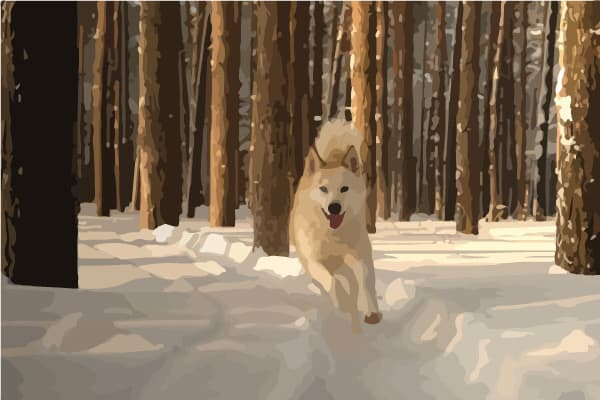 how to prevent your husky from running away