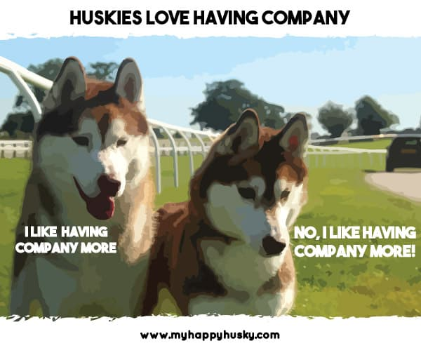 huskies do not like to be left alone