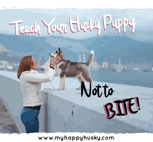 how to stop husky puppy from biting
