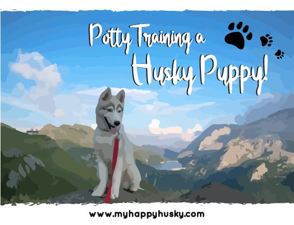 how to potty train a husky puppy