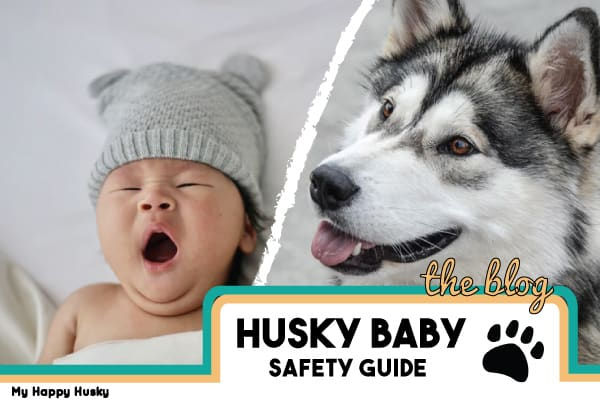 are huskies good with babies