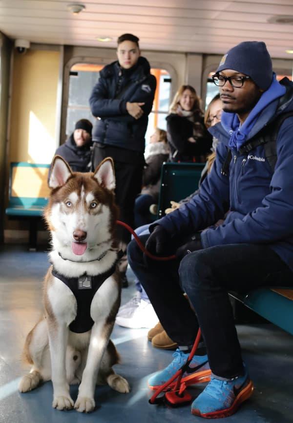 husky service dogs