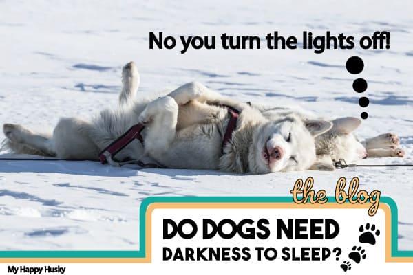 Do Dogs Need Darkness To Sleep?: Sleep FAQ Guide For Dogs