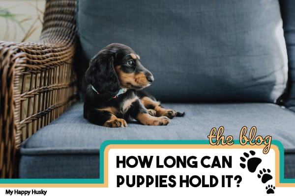 how long can puppies hold it