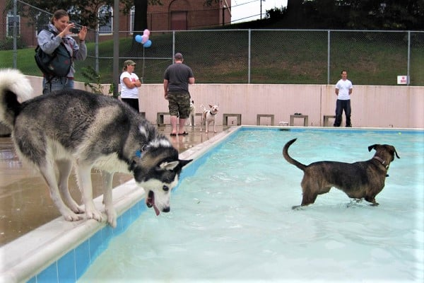 why are huskies afraid of water
