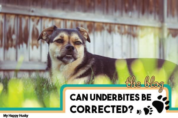 puppy underbite