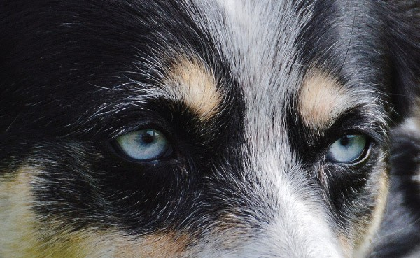 rottsky eyes