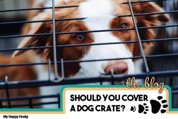 covering a dog crate