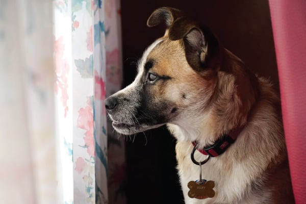 Do You Have An Underbite Puppy?