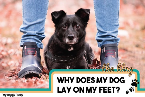 why does my dog lay on my feet