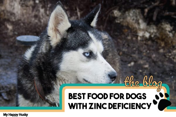 best dog food for zinc deficiency