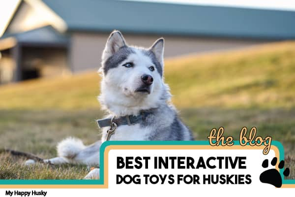best interactive dog toys for huskies