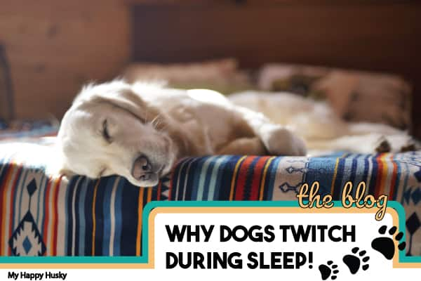 why your dog twitches during sleep