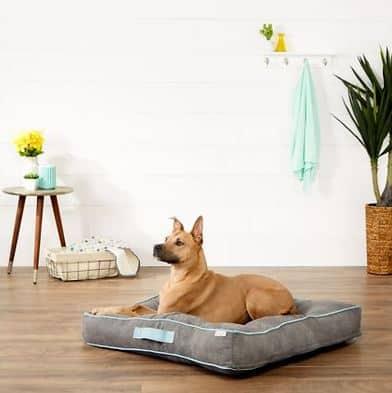 husky on a dog bed