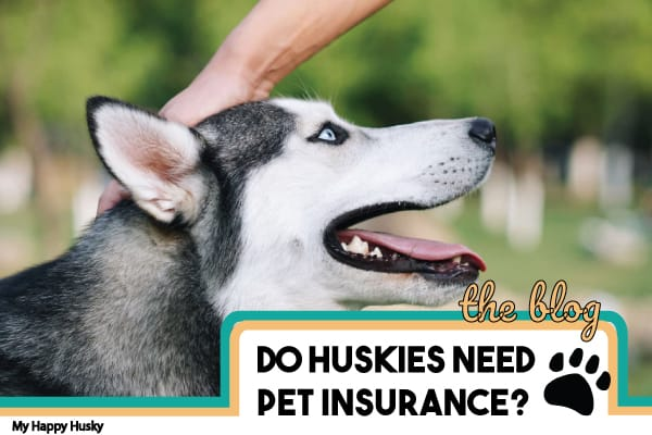 pet insurance for a husky