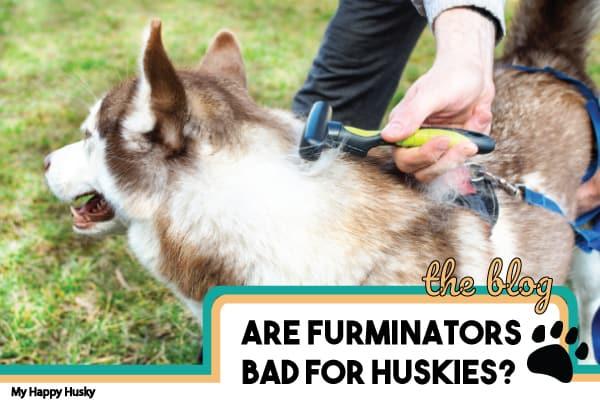 are-furminators-good-for-huskies