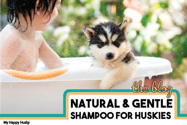 best-shampoo-for-huskies