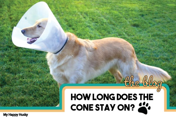 how-long-does-cone-need-to-stay-on-puppy