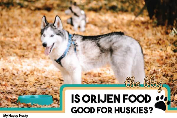 is-orijen-good-for-huskies