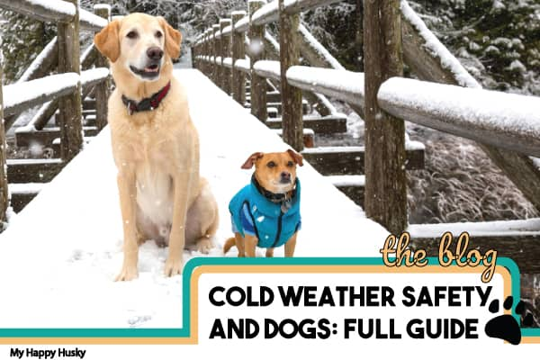 signs-your-dog-is-getting-too-cold