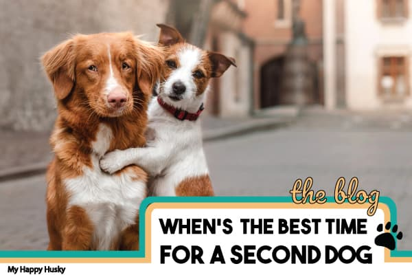 when-is-the-best-time-to-get-a-second-dog