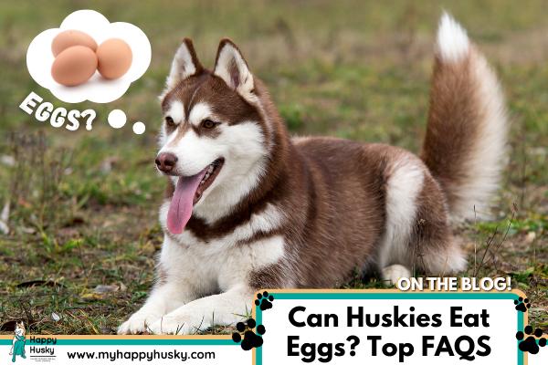 can-huskies-eat-eggs