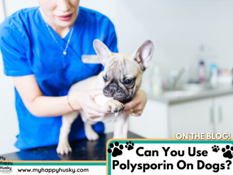 Can You Use Polysporin On Dogs? Vet Advice
